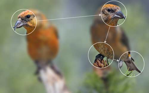 Photo of two birds overlaid with a typical set of eye movements